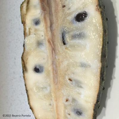 Soursop (guanabana)