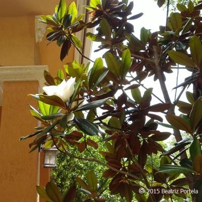 mom magnoliaA