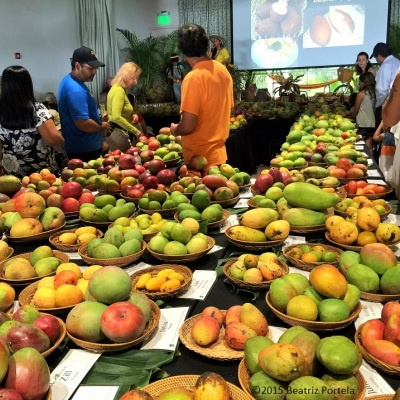 mango cultivars