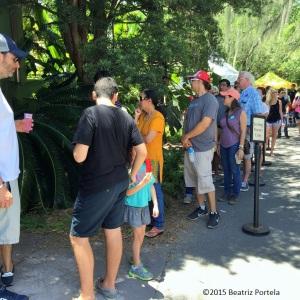 line for mango tasting