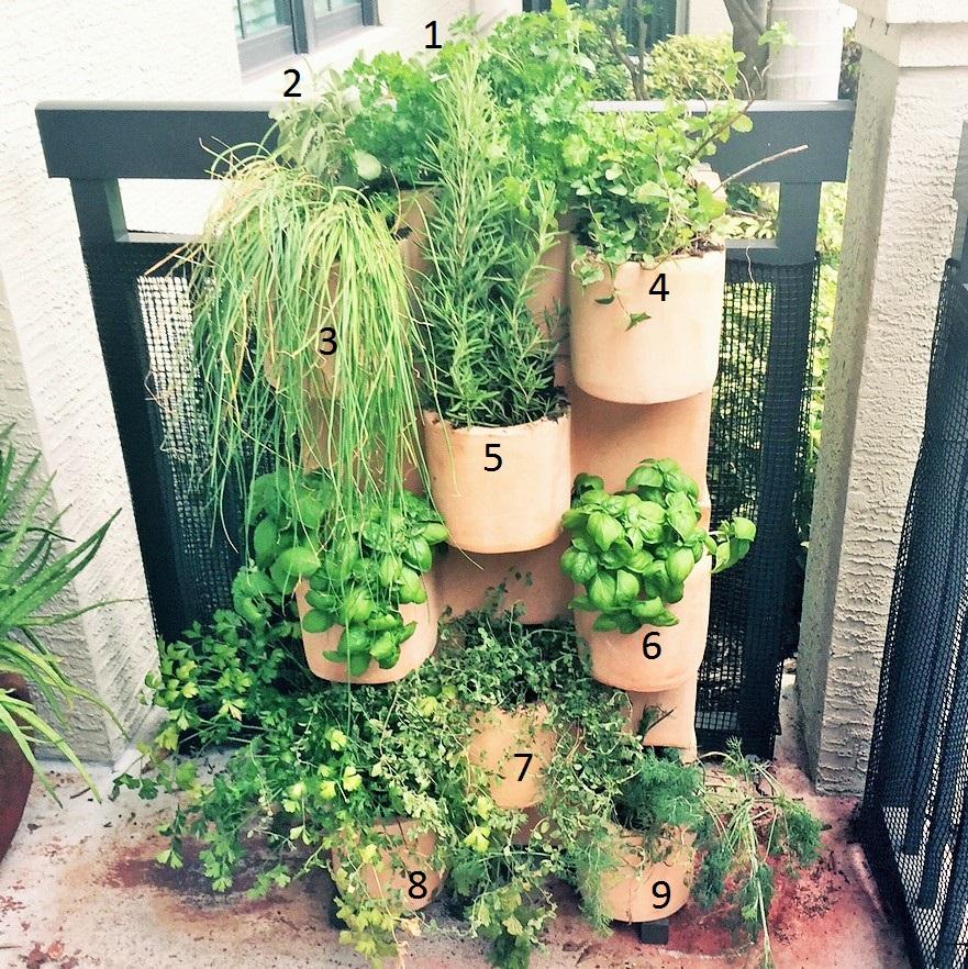 Herb Garden gardeningB